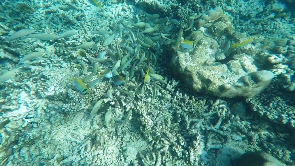 Pulau Rawa Activities: Scuba Diving
